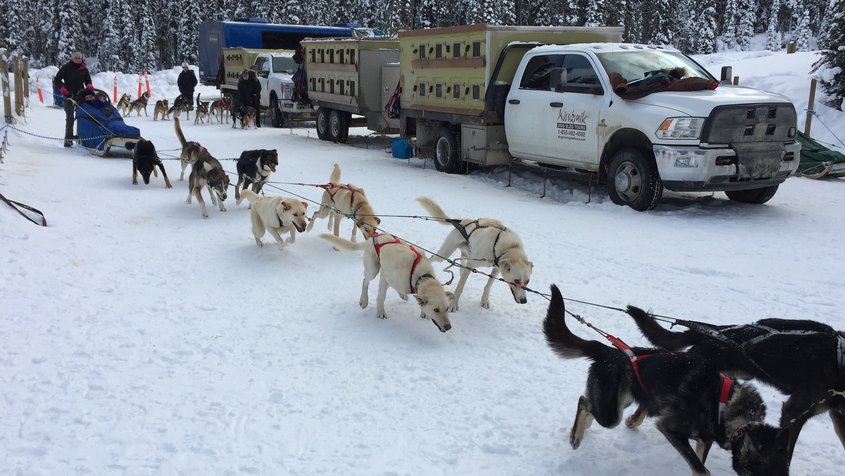 Lake Louise dog sledding