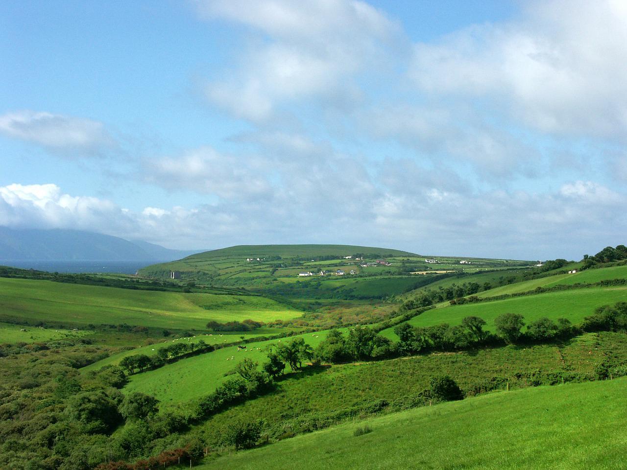 Irish grassland