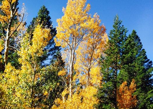 Autumn trees in the Sierra
