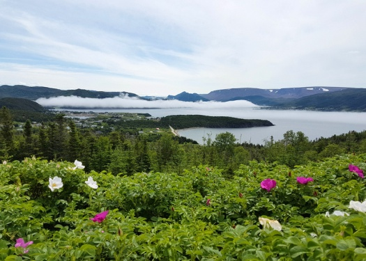 Norris Point Newfoundland