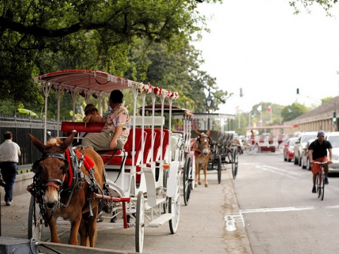Carriage rides in New Orelans