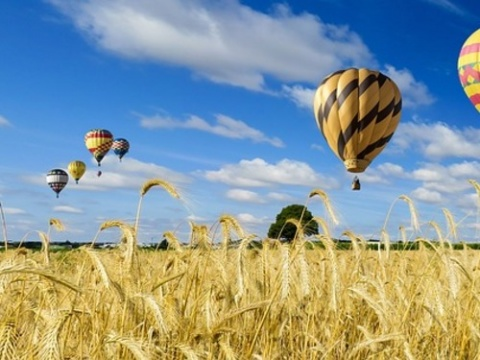 Hot air balloons over a yellow field