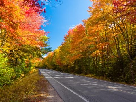 Road through the fall foliage