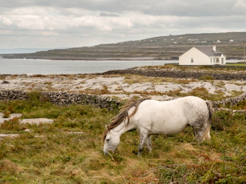 A horse grazing in Inis Mor, Ireland