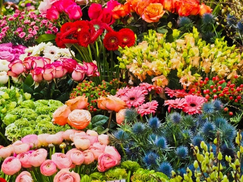 An array of flowers