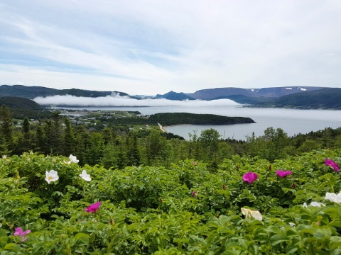 Norris Point Newfoundland